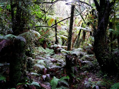 On the way to McLean Falls - The Catlins - New Zealand - © Claire Blumenfeld
