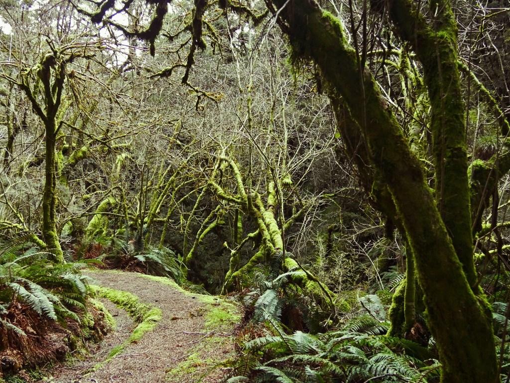 Kepler Track - Fiordland - New Zealand - © Claire Blumenfeld