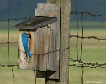 bluebird_at35499