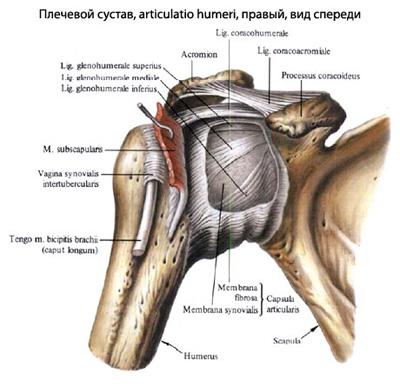 (DOC) Recuperarea fracturii de humerus | Gigi Duru - thelightdesign.ro