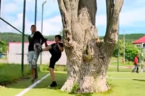 Tree-on-a-football-pitch