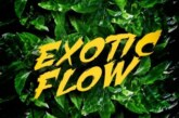 Omar Sterling – Exotic Flow (Prod. by Killmatic)