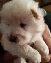 PuppyFind.com,733908