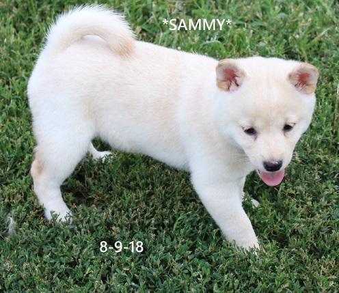 PuppyFind.com,3335