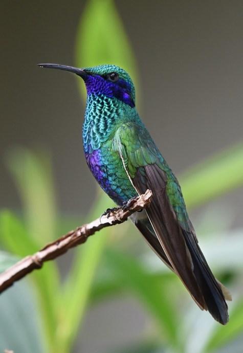 hummingbird-1823829_960_720