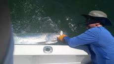 Ryan's Indian Pass Tarpon 2