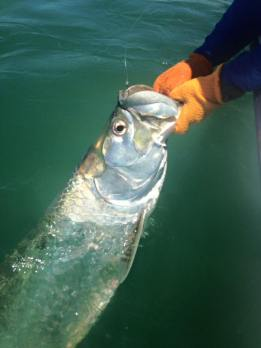 Indian Pass Tarpon Charters
