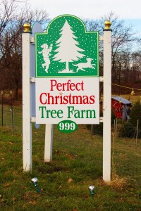 NJ Christmas Tree Farm: Perfect Christmas Tree Farm, Phillipsburg