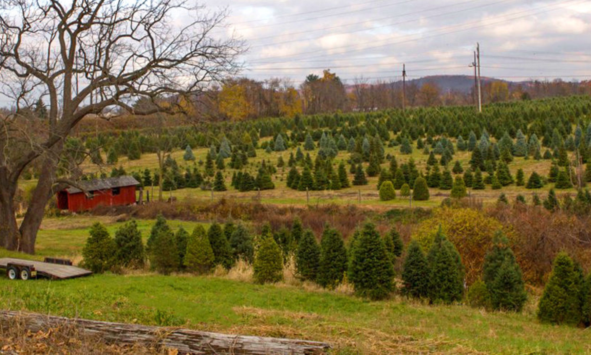 cropped-111-Hero-Christmas-tree-farm-in-NJ.jpg – Perfect Christmas ...