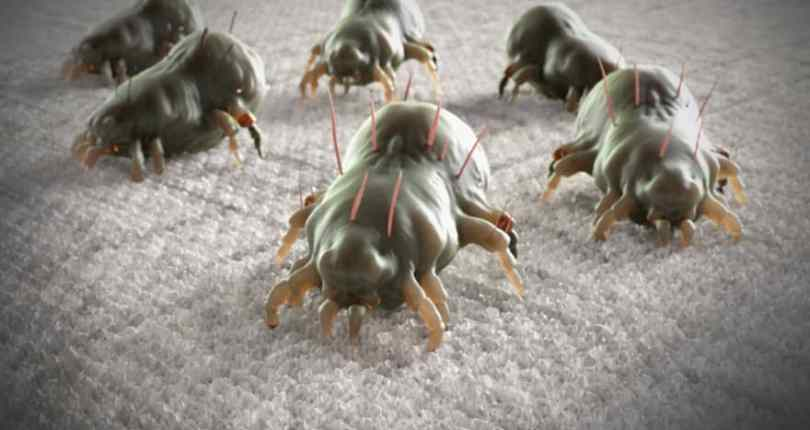 Bed Bug Treatments DIY Tips For All | Pest Controller