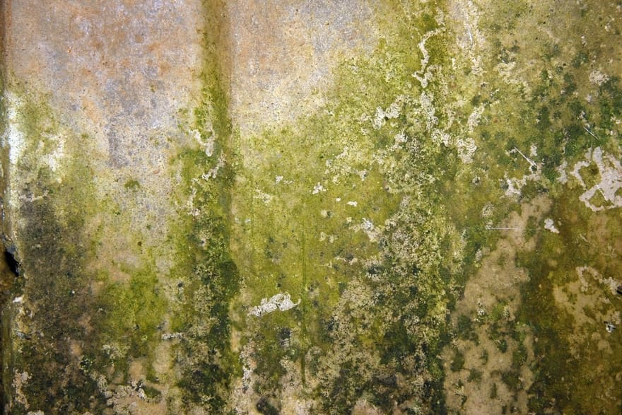 How To Prevent Mold And Mildew In Your Home