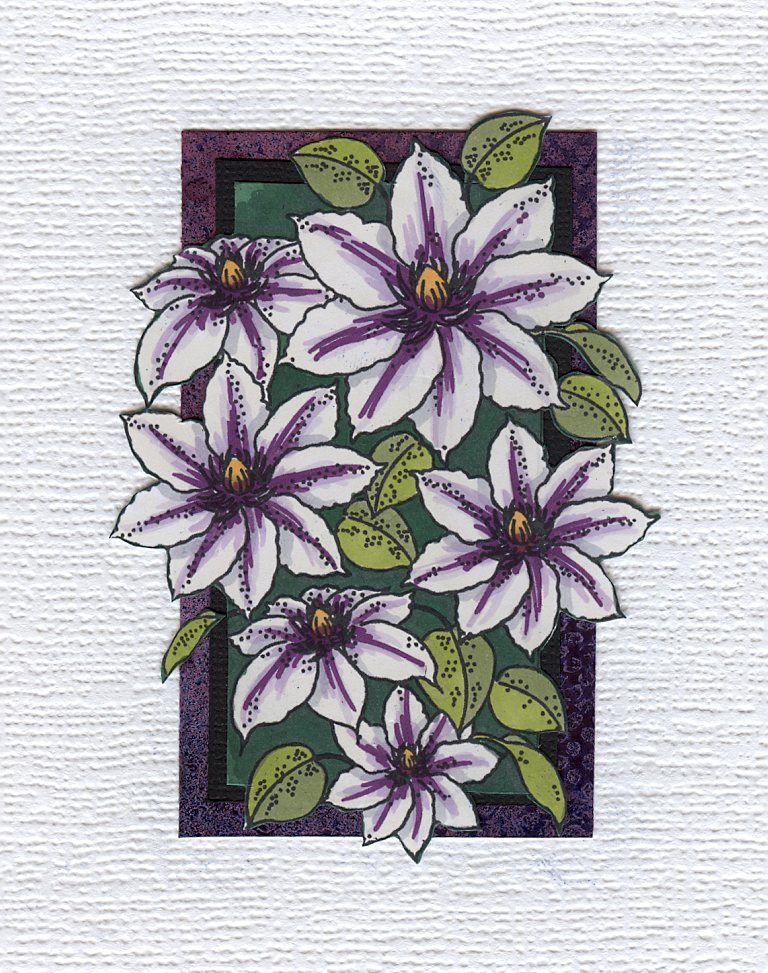 Mounted picture of clematis
