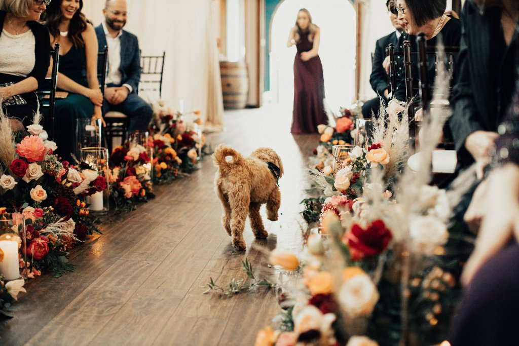 Ernie, Lisa + Tom's fur baby, had to be coaxed down the aisle as he changed his mind and headed back the way he started instead of making his way down the aisle. Click for more wedding inspiration from this modern boho wedding at Sodo Park in Seattle. Event planning by Perfectly Posh Events, based in Seattle and Portland. Wedding photography by Berty Mandagie. Florals by Herban Design Studio. #perfectlyposhevents