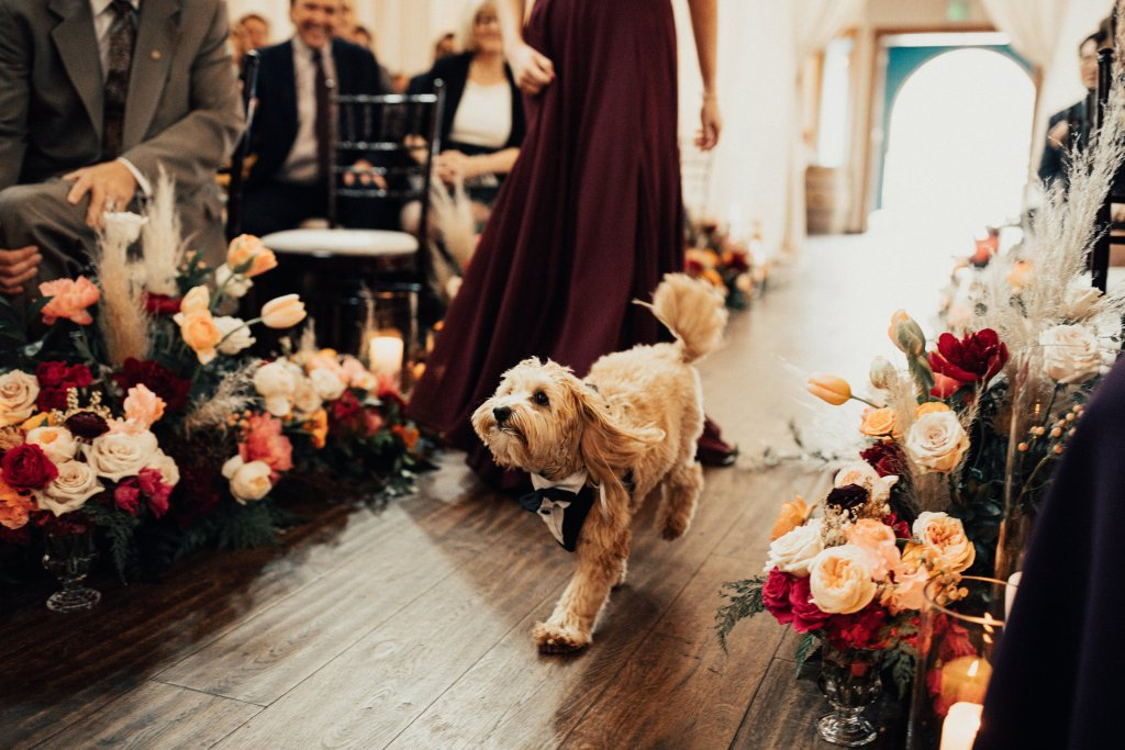 Ernie, Lisa + Tom's fur baby, stole the show as he made his way down the aisle in his dapper tuxedo. Click for more wedding inspiration from this modern boho wedding at Sodo Park in Seattle. Event planning by Perfectly Posh Events, based in Seattle and Portland. Wedding photography by Berty Mandagie. Florals by Herban Design Studio. #perfectlyposhevents