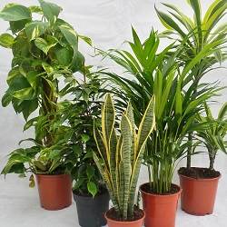 Buy House Plants Online From Perfect Plants Indoor Plants Mail Order Buy Trees Shrubs Perennials Annuals House Plants Statues And Furniture