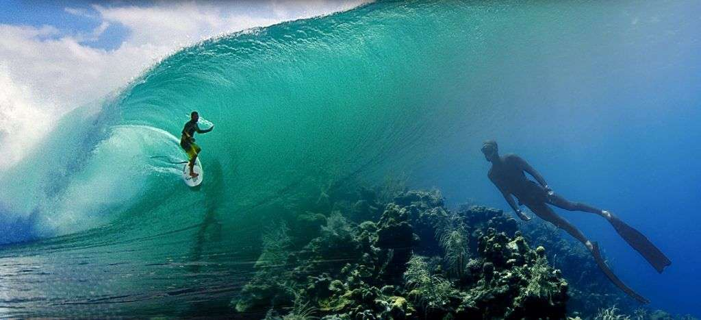 Surfer Survival