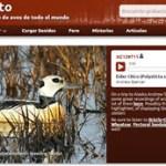 Xeno-Canto – una web para los aficionados de las aves con 225 mil archivos de audio