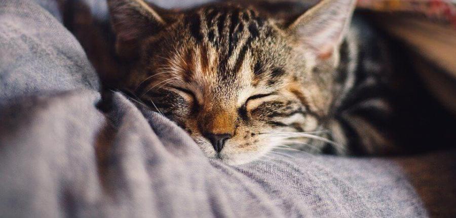 sommeil insomnie dormir | sophrologue Vincennes Pierre Cochat
