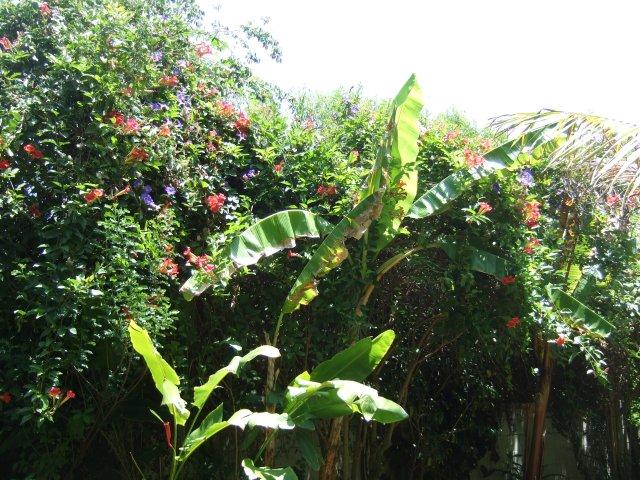 la garden