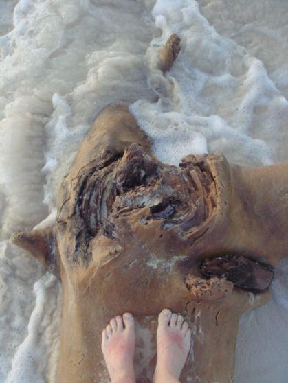 Sel de Vetiver Beach wood MorgueFile