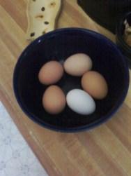 egg9.3.13