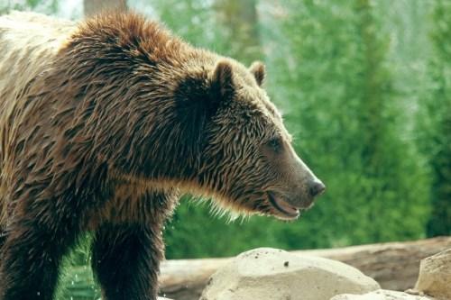 Cologne Pour Le Soir Maison Francis Kurkdjian grizzly-bear-profile