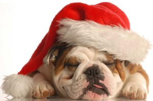 bulldog_christmas