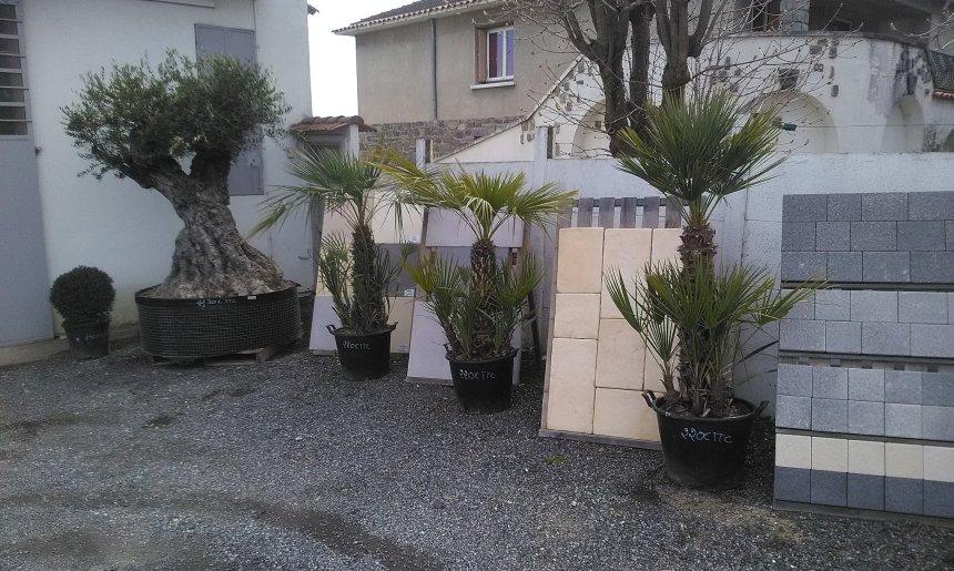 Perger Paysages vous invite a venir découvrir son EXPO: végétaux d'exception Oli…