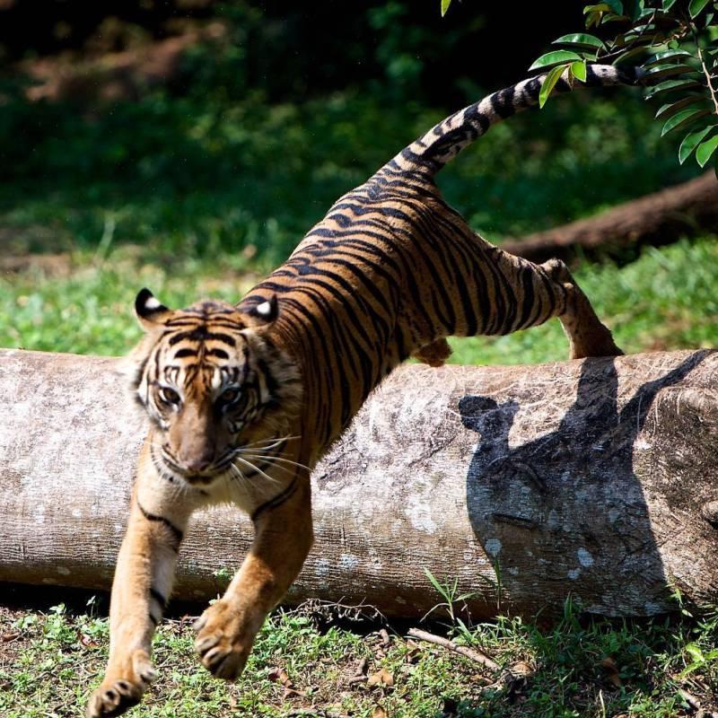 Anda bisa berkunjung ke Kebun Binatang Ragunan untuk berwisata via @ragunanzoo