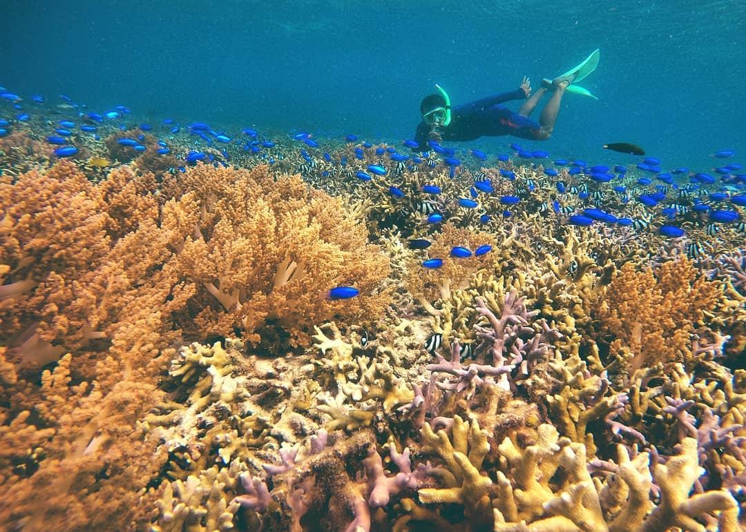 Pulau menjangan adalah salah satu tempat wisata Pemuteran Bali yang terkenal.