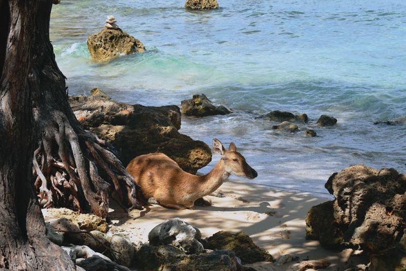 Jangan lupa mampir ke Pulau Menjangan agar bisa bertemu dengan makhluk lucu ini! via @sofiehuybrechts
