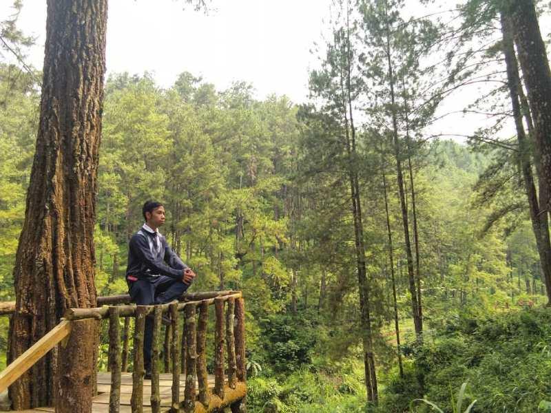 Daftar Tempat Wisata Di Blitar Jawa Timur Lengkap, Hutan Pinus Tulungrejo Blitar