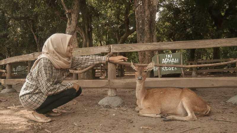 Daftar Tempat Wisata Di Blitar Jawa Timur Lengkap, Penangkaran Rusa Maliran Blitar