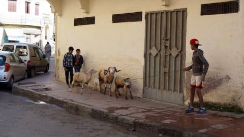 pojat paimentavat lampaita