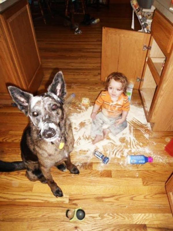 perierga.gr - 15 σκυλιά που θα έκαναν τα πάντα για τα παιδιά!