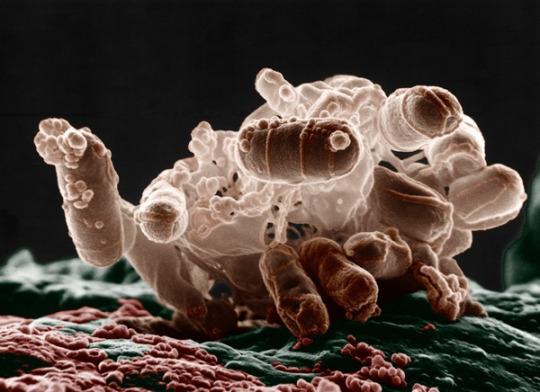 perierga.gr - 10 μικροοργανισμοί που ζουν στο νερό!
