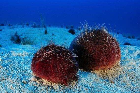 perierga.gr - Νέα είδη θαλάσσιας ζωής ανακαλύφθηκαν στις Φιλιππίνες!