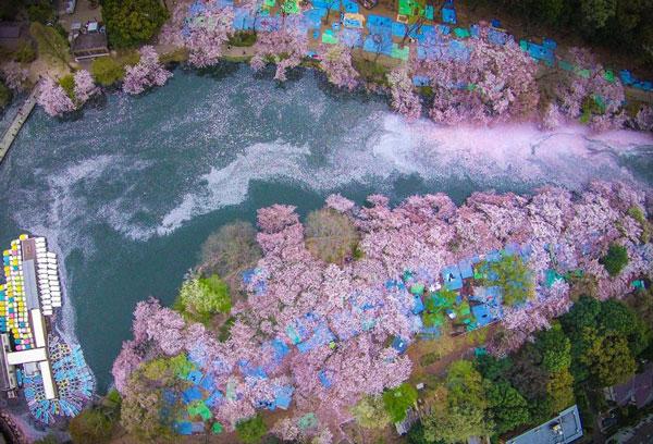 perierga.gr - Υπέροχες ανοιξιάτικες εικόνες στη φύση!