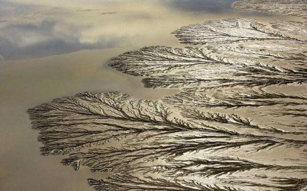 perierga.gr - Τα γιγάντια «δέντρα» του ποταμού Κολοράντο!