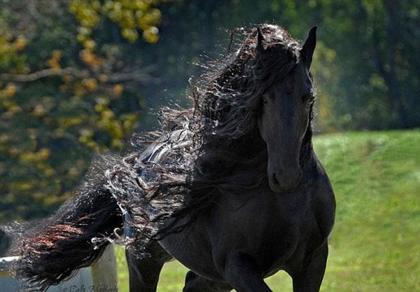 perierga.gr - Tο πιο όμορφο άλογο του κόσμου!