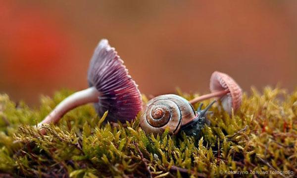 perierga.gr - Ο μικροσκοπικός κόσμος των σαλιγκαριών στο φακό του φωτογράφου!