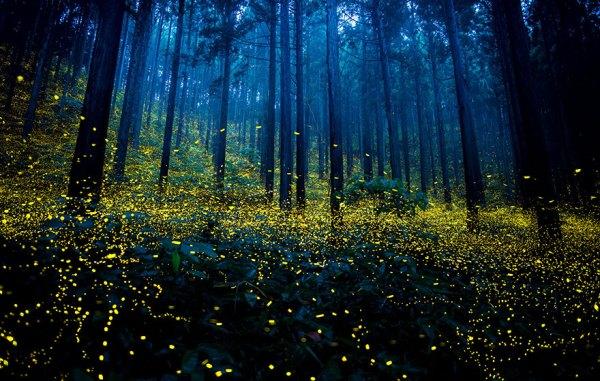 perierga.gr - Εκπληκτικές πυγολαμπίδες στην Ιαπωνία!