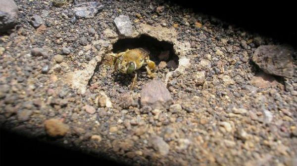 perierga.gr - Σπάνιο είδος μελισσών ζει σε ενεργό ηφαίστειο!
