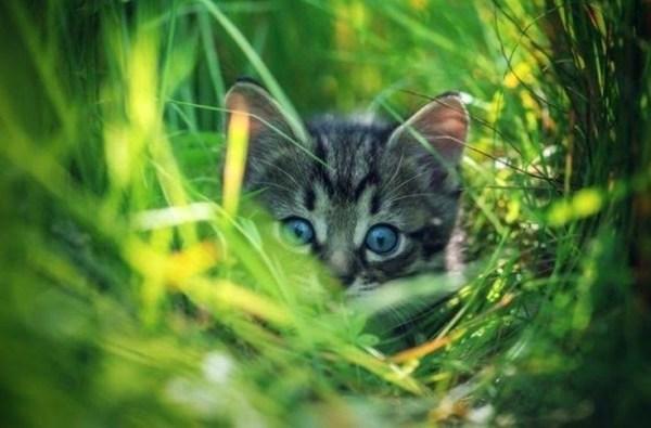 perierga.gr - Πώς βλέπουν τον κόσμο μπροστά στα μάτια τους διάφορα ζώα;