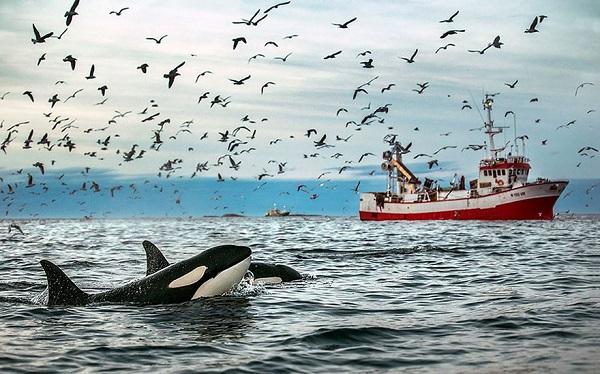 perierga.gr - Φωτογραφίζοντας φάλαινες στην Αρκτική!