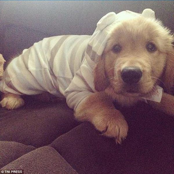 Perierga.gr Σκυλιά φοράνε πιτζάμες και είναι αξιολάτρευτα!