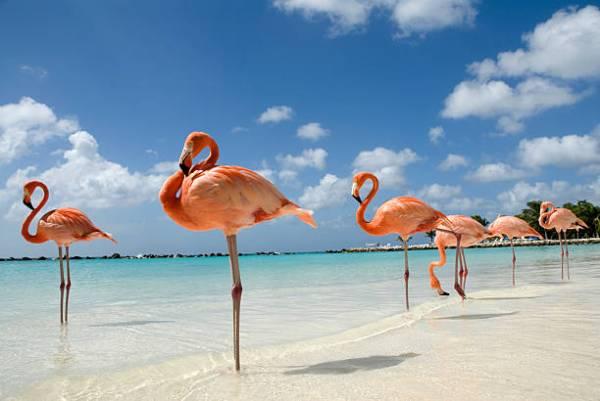 perierga.gr - Η πανέμορφη παραλία των... φλαμίνγκο!