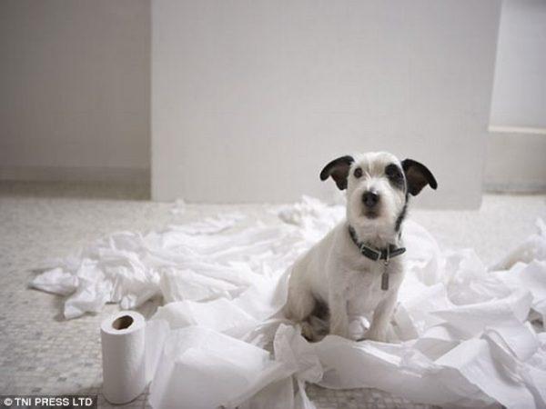 perierga.gr - Σκυλιά μένουν μόνα τους και κάνουν... καταστροφές!