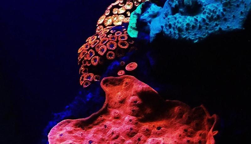 perierga.gr - Κοράλλια στο βυθό παράγουν το δικό τους φως!