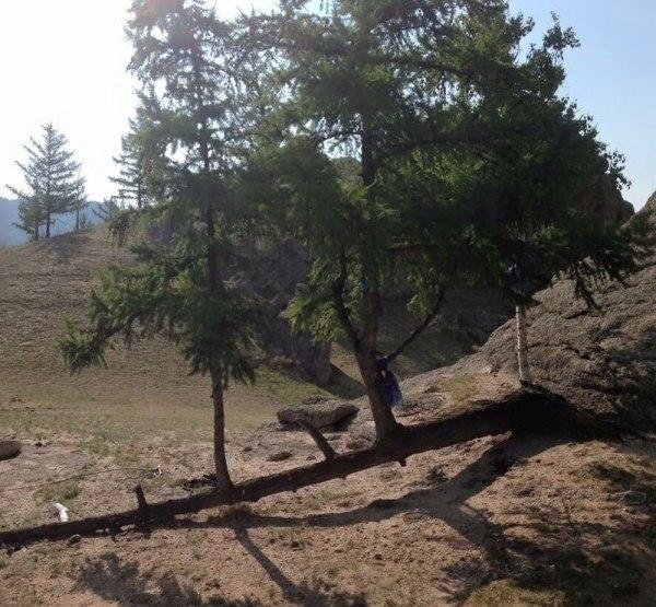 perierga.gr - Δέντρα που... αρνήθηκαν να πεθάνουν!